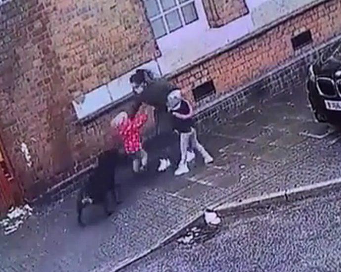 Dog attack on children