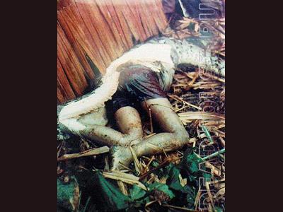 The anaconda swallowed the child